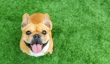 A Growing Group Of CBD Clients Isn't Even Human. Its Members Value CBDs' Anti-Pain Advantages– With A Resounding 'Woof!'