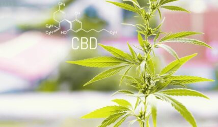 "The CBD ""Market"" Is Here To Stay"